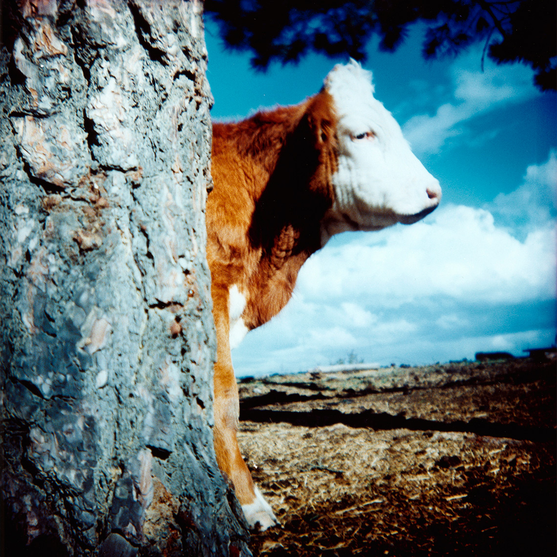 CB_COW_TREE_COL
