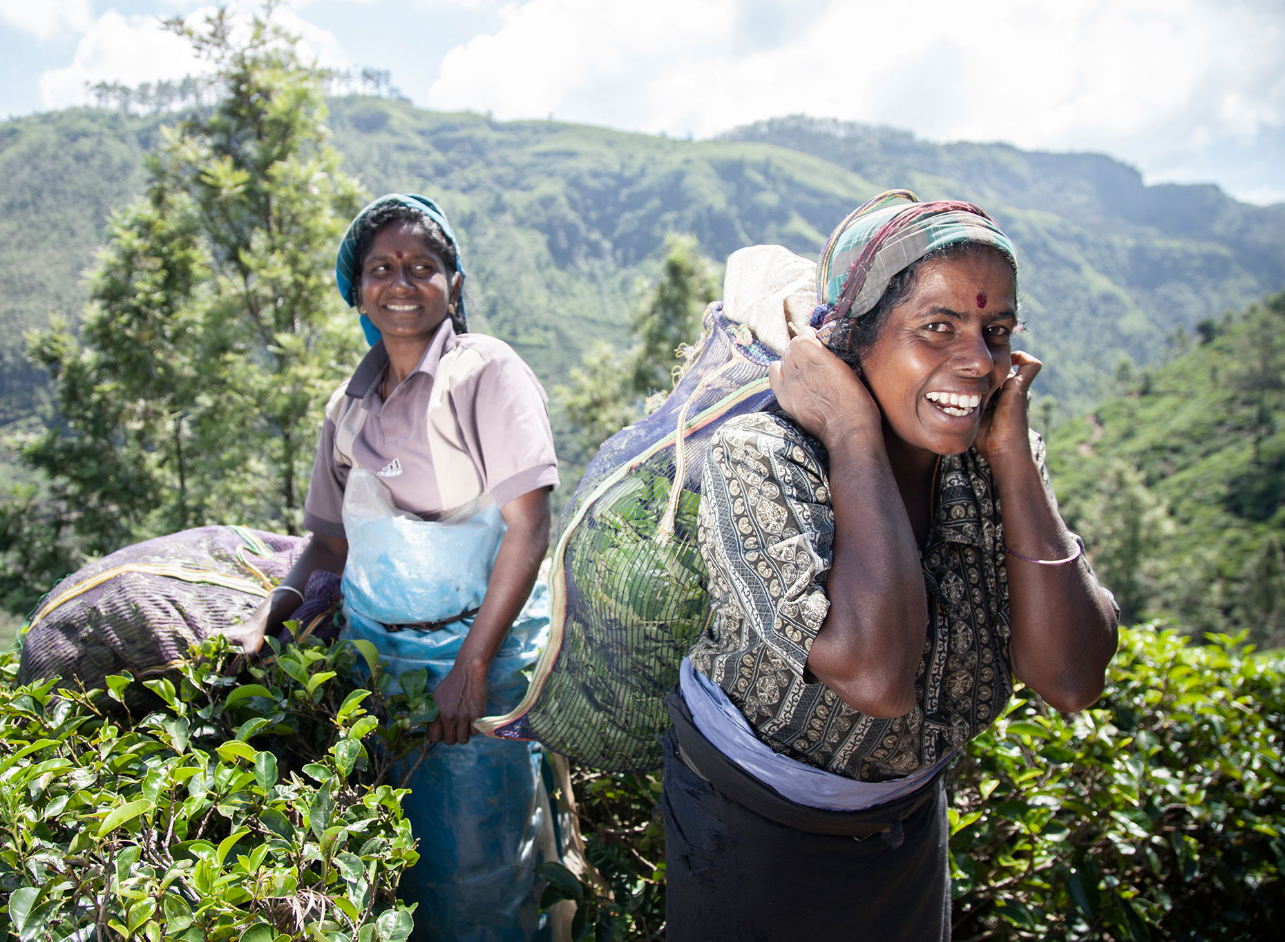 CB_WV_2-TEA-PICKERS_0395